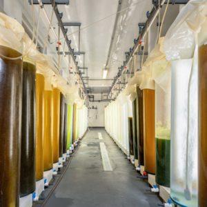 photo of lab testing cylinders of liquid algae