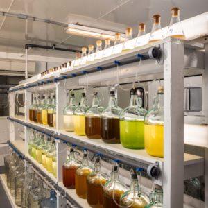 photo of lab testing jars of liquid algae