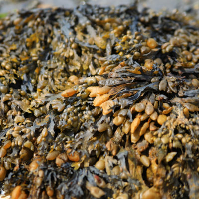 photo of seaweed