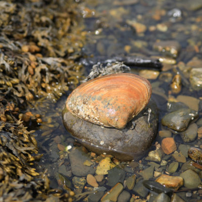 photo of shell on rock in tide pool